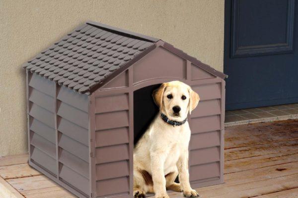 Trova la cuccia per cani che fa per te: cucce da esterno e impermeabilizzate, nelle quali il tuo cane starà caldo e riparato